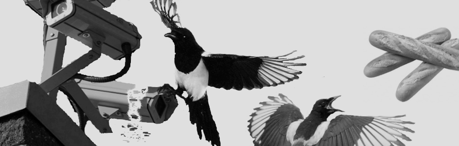 MAGPIE PROJECT